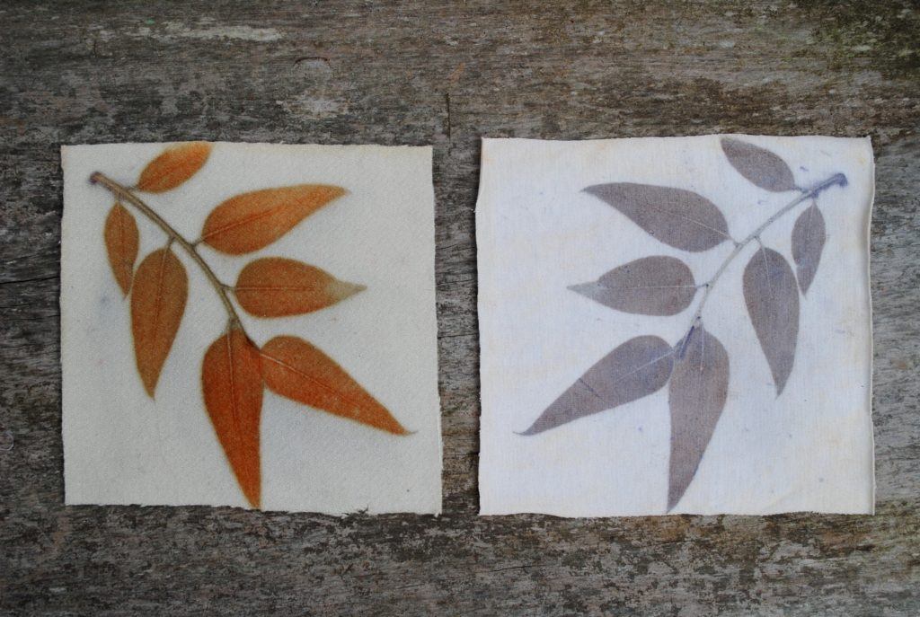 Bright orange and brown gum leaf eco-prints, from the same leaves on different fabric
