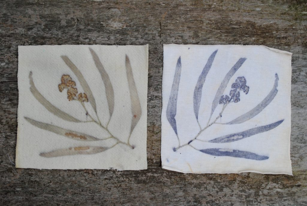 Gum leaf and gumnut eco print experiments