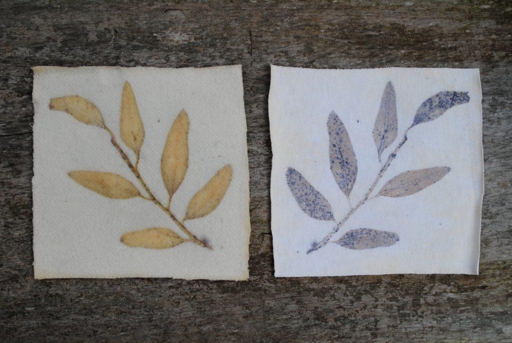 Eco-printing on wool versus cotton