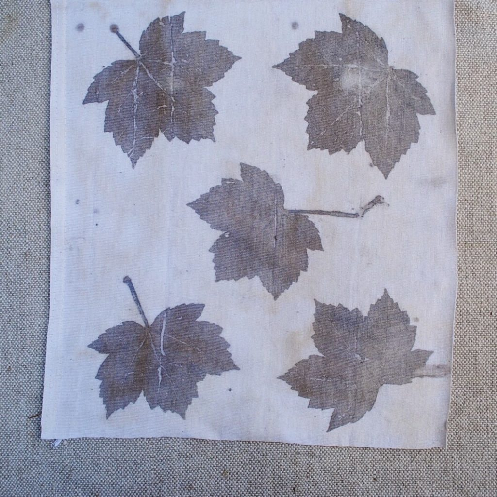 Tannin rich maple leaves eco-printed on cotton