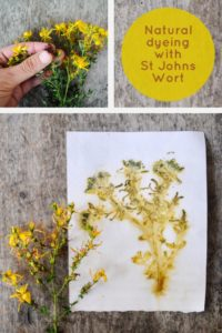 Tips about eco-printing on paper with the natural dyes in St John's Wort