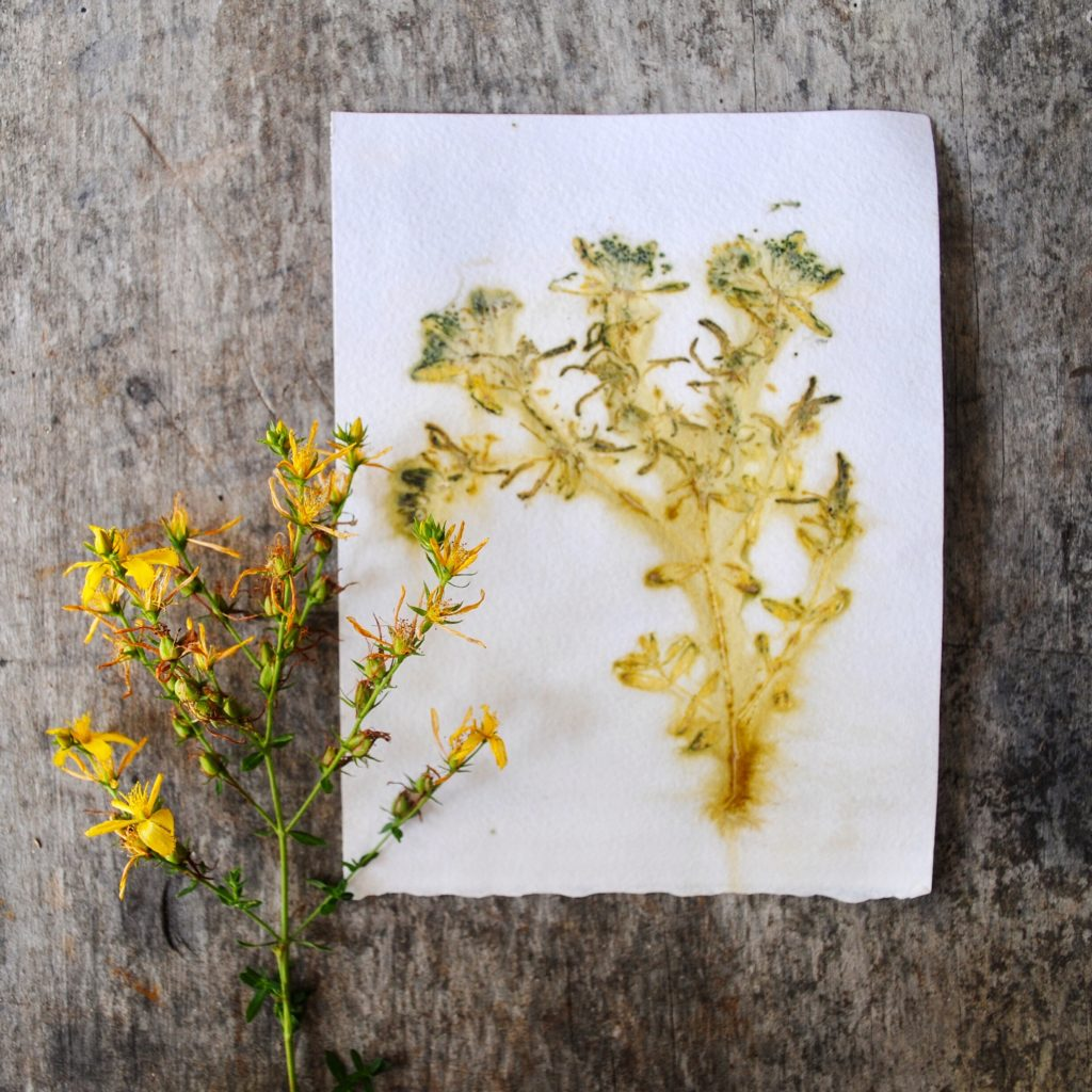 Eco-printing on paper with herbs