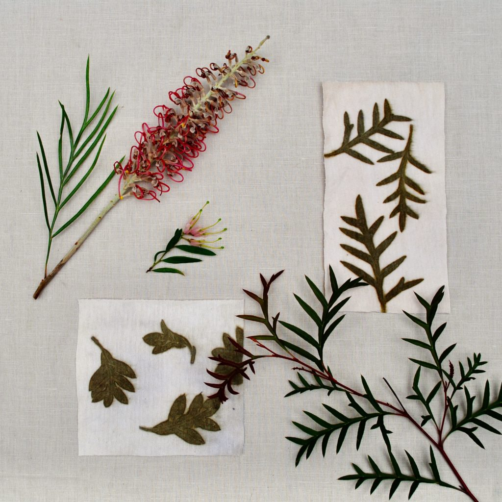 Grevillea leaf eco-print, from The Leaf Guide ebook